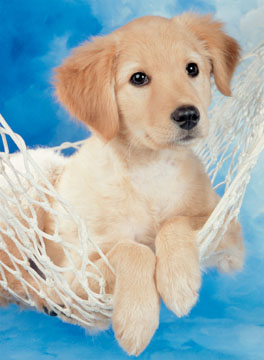 Gt ravensburger gt puzzels 100 stukjes gt puzzel schattige hond 100