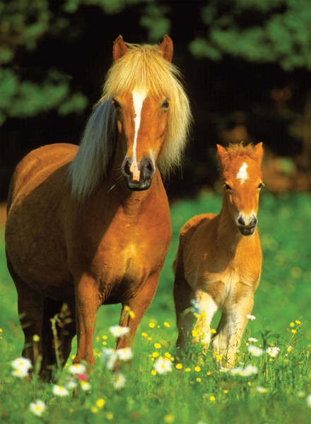 Info Paardjes Mijnpaardjes Jouwweb Nl