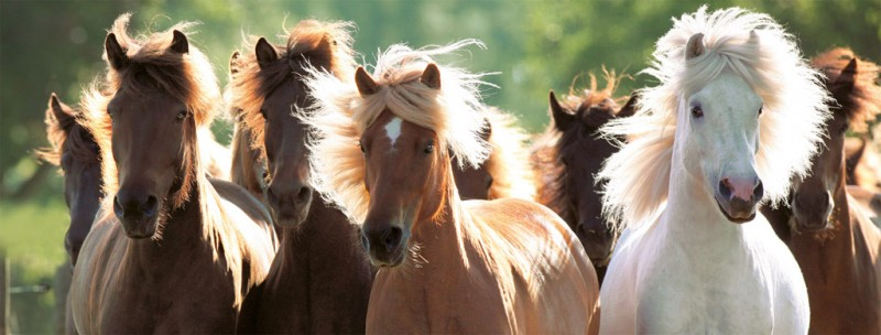 Gt ravensburger gt puzzels 1000 stukjes gt puzzel wilde paarden 1000