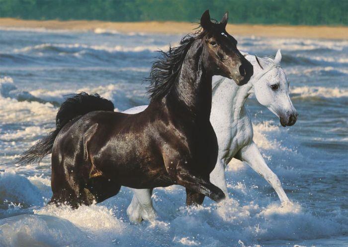 Puzzel Paarden Aan Het Strand 1500
