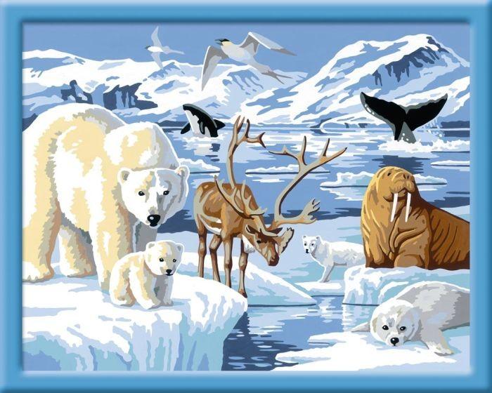Ravensburger Schilderen Op Nummer Dieren Van De Noordpool